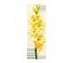 گل گلایل موریسا