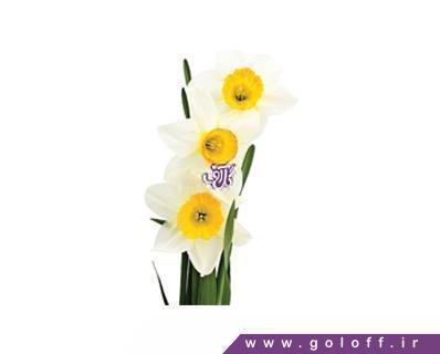 گل نرگس