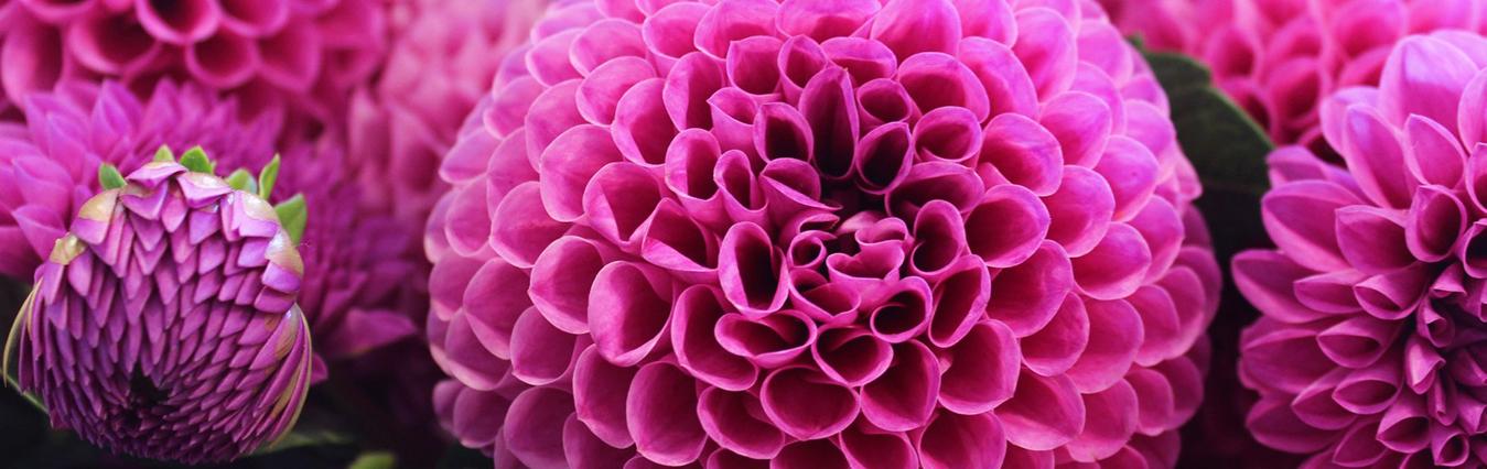 گل فروشی آنلاین  اصفهان
